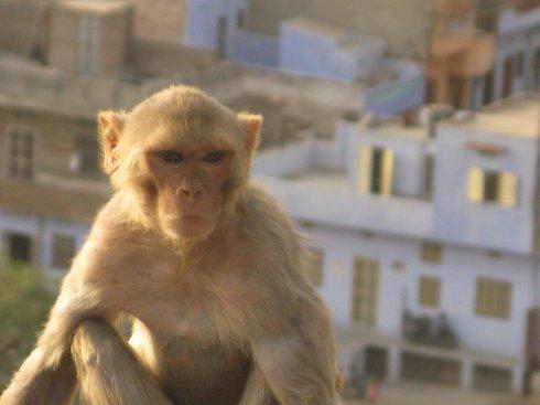 monkey_temple2.jpg
